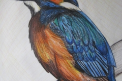 Kingfisher coloured drawing