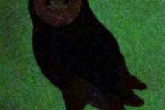 Owl embroidery in the dark